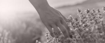 hand flowing in lavender